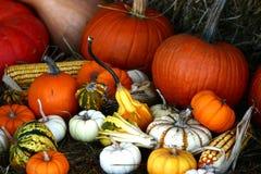 Kleurrijke Pompoenen Stock Foto
