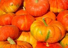 Kleurrijke pompoenen Stock Afbeeldingen