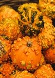 Kleurrijke pompoenen De pompoenen van Halloween Stock Foto