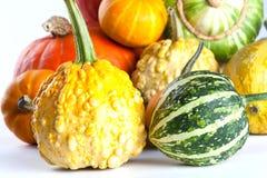 Kleurrijke pompoenen De pompoenen van Halloween Witte achtergrond Royalty-vrije Stock Afbeeldingen