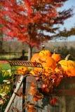 Kleurrijke pompoenen en pompoenen Stock Afbeeldingen