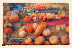 Kleurrijke pompoenen en pompoenen Royalty-vrije Stock Foto's