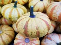 Kleurrijke Pompoenen, Landbouwers` s Markt, Sinaasappel & Wit royalty-vrije stock afbeeldingen