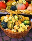 Kleurrijke pompoenen in mand Royalty-vrije Stock Foto