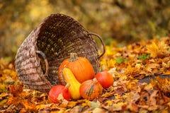 Kleurrijke pompoenen in mand met bladeren, de Herfst in de tuin Royalty-vrije Stock Afbeelding