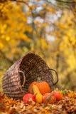 Kleurrijke pompoenen in mand met bladeren, de Herfst in de tuin Royalty-vrije Stock Foto's