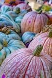 Kleurrijke Pompoenen voor verkoop Stock Afbeelding