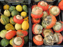 Kleurrijke pompoeneninzameling op de markt Stock Foto's