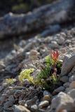 Kleurrijke rockeryinstallaties op steenachtige grond Royalty-vrije Stock Fotografie