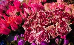 Kleurrijke Rode Bloemen Stock Afbeelding