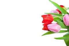 Kleurrijke rode en roze tulpen Royalty-vrije Stock Fotografie