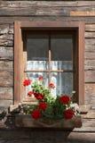 Kleurrijke rode geraniums in een vensterdoos royalty-vrije stock afbeelding