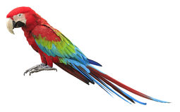 Kleurrijke rode papegaaiara Stock Foto