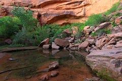 Kleurrijke Rode Rots van Zion National Park stock fotografie