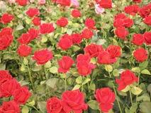 Kleurrijke rood nam bloem voor valentijnskaart toe Stock Afbeeldingen