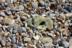 Kleurrijke rots Stock Foto