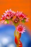 Kleurrijke roze bloemen in de lente royalty-vrije stock afbeeldingen