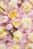 Kleurrijke roze en gele bloemenachtergrond royalty-vrije stock afbeeldingen