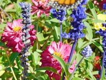 Kleurrijke Rozen bij het Park stock afbeeldingen