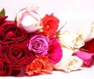 Kleurrijke rozen op witte achtergrond Royalty-vrije Stock Foto