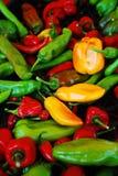 Kleurrijke Ruwe Peperclose-up Royalty-vrije Stock Afbeeldingen
