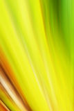 Kleurrijke Samenvatting Stock Foto's