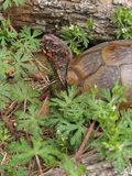 Kleurrijke schildpad Stock Foto's