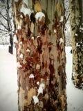 Kleurrijke schors met sneeuw royalty-vrije stock afbeelding