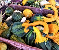 Kleurrijke seizoengebonden pompoenen in purpere rieten mand Stock Fotografie
