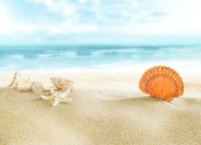 Kleurrijke shells op het strand Stock Foto