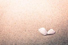 Kleurrijke Shells in Zand bij het Strand Stock Afbeelding