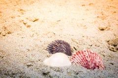 Kleurrijke Shells in Zand bij het Strand Royalty-vrije Stock Afbeelding