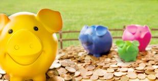 Kleurrijke spaarvarkens die zich onder muntstukken bevinden Royalty-vrije Stock Foto