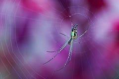 Kleurrijke spin in Web Stock Afbeeldingen