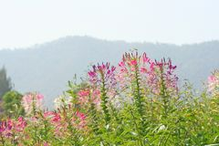 Kleurrijke spinbloemen royalty-vrije stock afbeeldingen