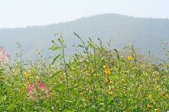 Kleurrijke spinbloemen stock foto
