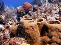 Kleurrijke sponsen royalty-vrije stock afbeeldingen