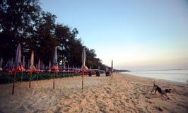 Kleurrijke strandmeubilair en hond op het Strand van Cha am Stock Foto