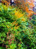 Kleurrijke struik Stock Foto