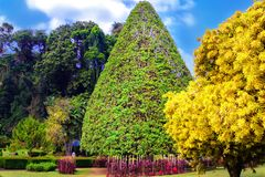 Kleurrijke struiken en bomen, bloembedden en decoratieve samenstellingen Royalty-vrije Stock Fotografie