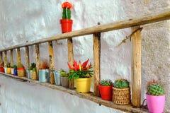 Kleurrijke succulent op een houten trede in een straat - Italië royalty-vrije stock afbeelding