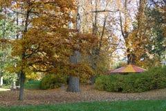 Kleurrijke tent onder de herfsteik Royalty-vrije Stock Foto