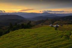 Kleurrijke terrasvormige rijst stock foto