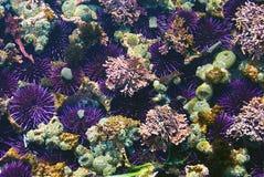 Kleurrijke tidepool Royalty-vrije Stock Fotografie