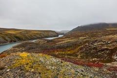 Kleurrijke toendra in mist en rivier het Noordpoolgebied van Amguema Stock Afbeelding
