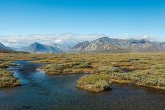 Kleurrijke toendra voor de rivier en Royalty-vrije Stock Fotografie