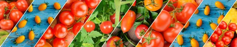 Kleurrijke tomatenachtergrond Verse Organische Tomatentextuur wijd stock fotografie