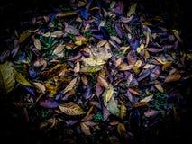 Kleurrijke trillende en heldere die achtergrond van gevallen de herfstbladeren wordt gemaakt royalty-vrije stock fotografie
