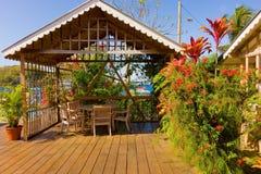 Kleurrijke tropische bloesems door het overzees royalty-vrije stock foto's