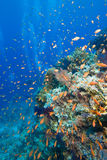 Kleurrijke tropische ertsader, Rode Overzees, Egypte Royalty-vrije Stock Foto's